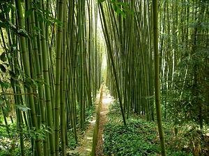 bamboo-1847933_960_720_0.jpg
