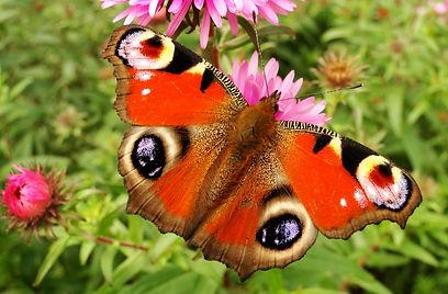 Butterfly eyes - krzysztof-niewolny-Nydq