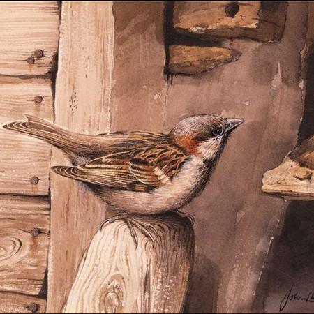 Sparrow at Spirthill barn
