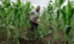 Tata Organic farming.jpg