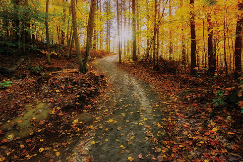 Nature trail strewn with fallen leaves lined with trees with fall foliage.