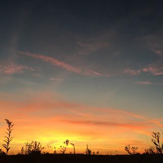 in-the-sunset-field-E4GU7FR.jpg