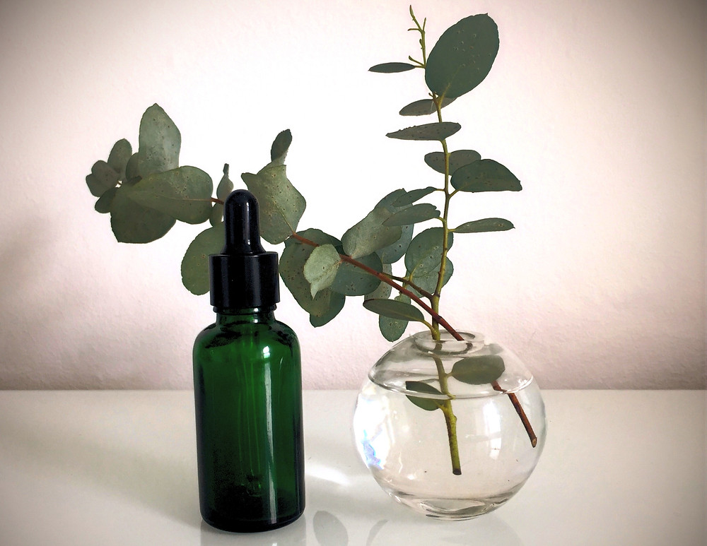 Eucalyptus essential oil is used in Aromatherapy for its antibacterial, decongestant and antiseptic therapeutic properties