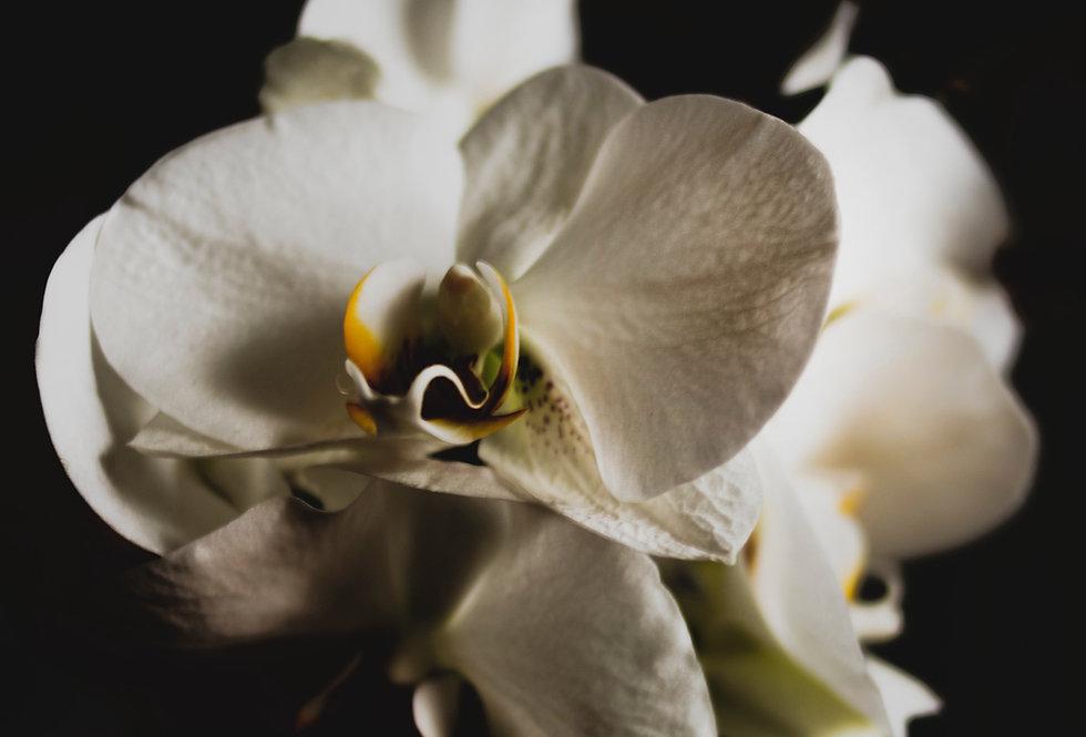Black Orchid & Raspberry