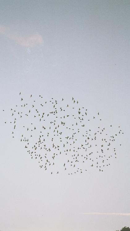 Birds - phone wallpaper