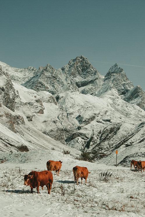 Mountain dwellers -  phone wallpaper