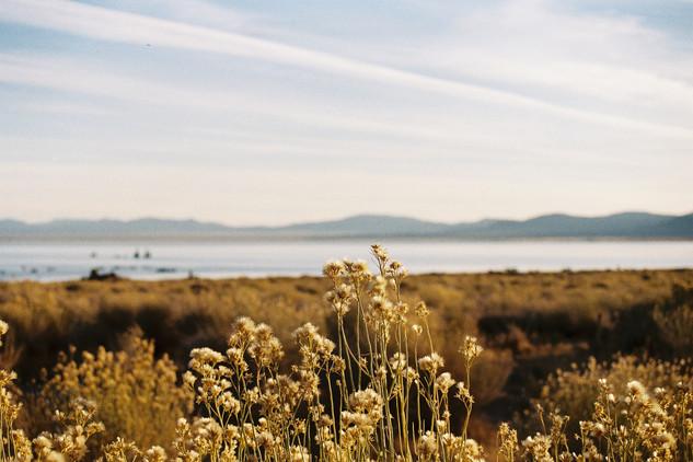 Monolake - Californie