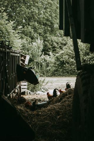 à la ferme - juin 20