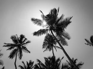 Palms sun b&w.jpg