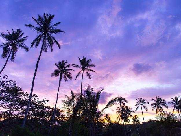 Purple palms.jpg