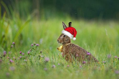 1 jährige Patenschaft 100m² Blühwiese zu Weihnachten