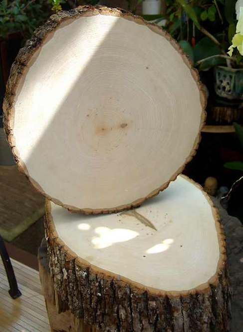 6 Pack Large Wood Slices