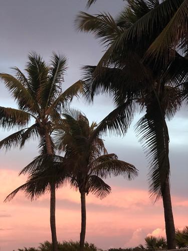 sunset in miami.Jמיאמי המלצות למיאמי אטרקציות במיאמי