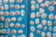 אנדרוס המלצות לאנדרוס.jpg