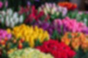 tulip amsterdam.jpg