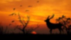 sunset-654838_1920.jpg