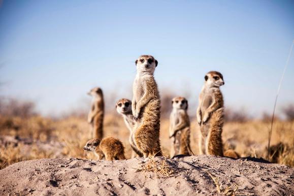 14 DAYS  NAMIBIA | BOTSWANA