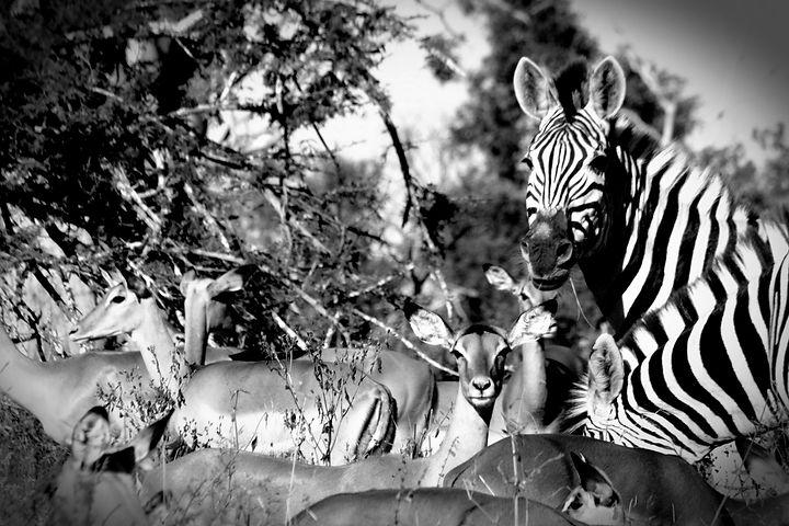 Golden Africa Safaris - Okavango Delta (
