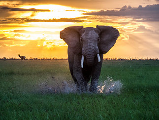 Best of Kenya - Planning your custom luxury african safari