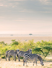 Kenya, Tanzania & Zanzibar - 3 weeks