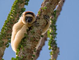 Madagascar, Zambia & South Africa - 17 Days