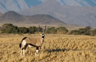 Travel to Namibia wildlife safari