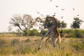12 Days Bucket List Botswana