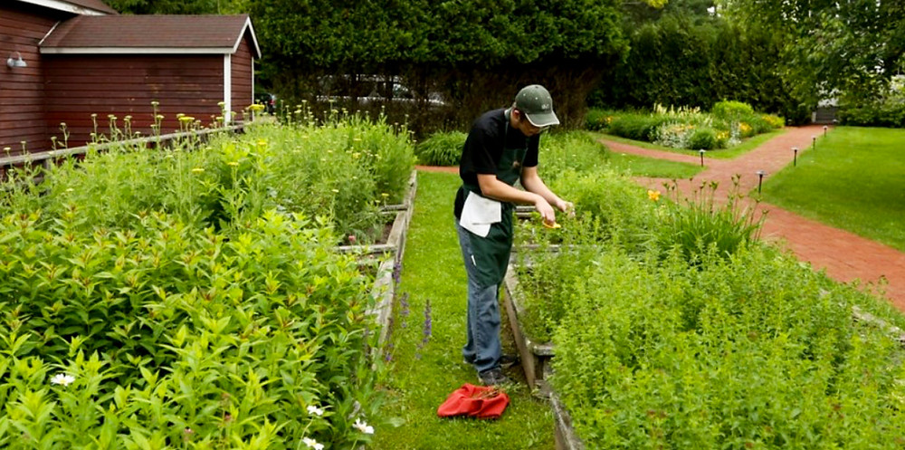 Vegetable garden, green grass everywhere!