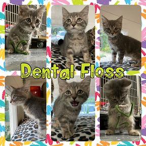 Dental_Floss.jpg