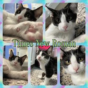 Times_New_Roman.jpg