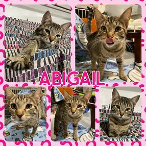 Abigail.PNG