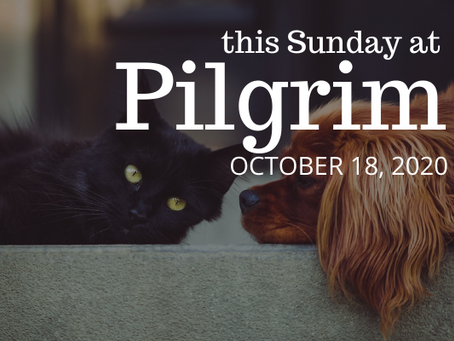 Blessing of the Animals via Zoom this Sunday, October 18