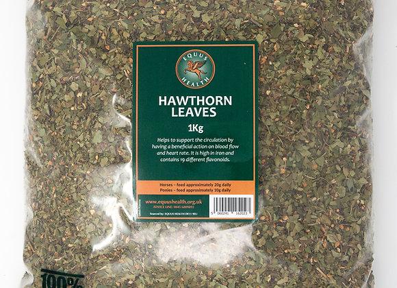 Equus Health Hawthorn Leaves