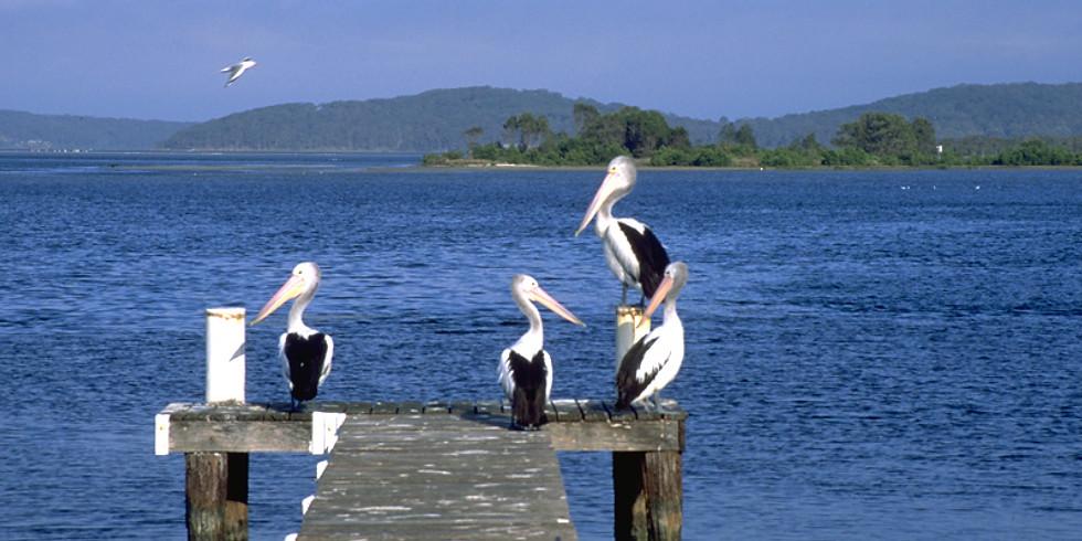 Lake Macquarie Coastal Cruise