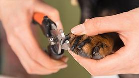 nail clipping montreal