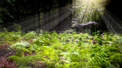 natural-fern-in-forest-with-penetrating-