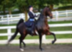 SW Horse.jpg
