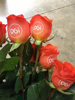 PGi Roses