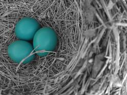 Klepac,T_Robin Eggs