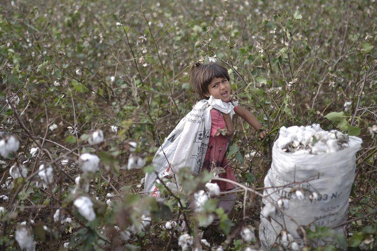 Des enfants travaillent dans des champs de cotons