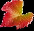 Grape Leaf 03.png