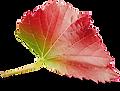 Grape Leaf 02.png