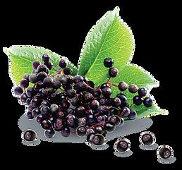 Elderberry - Fruit with Leaf-01.png