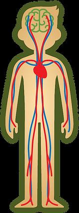 Men Blood circulation - Icon.png
