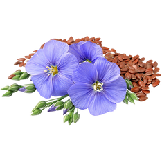Flaxseed with Flower