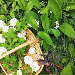 花摘みパニエ
