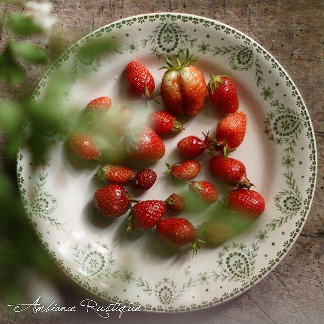 Ambience Rustique pour votre jardin vol. 3