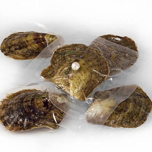 3 Akoya AAA Certified Oysters
