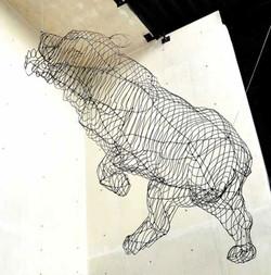 (4)Estudio de oso Grizzly