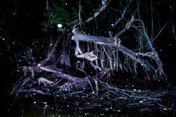 (3)Bosque-anfibio
